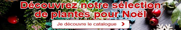 Noël: Notre sélection de plantes