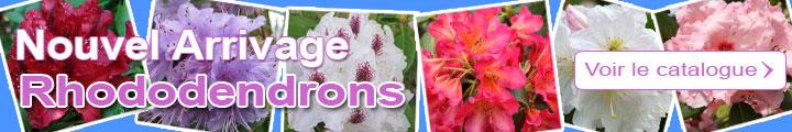 Je découvre le catalogue des Rhododendrons