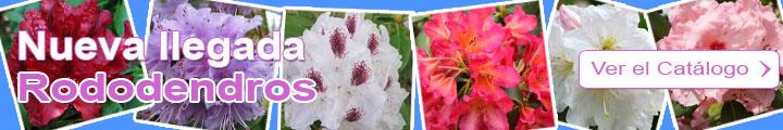 Descubro el Catálogo de Rododendros