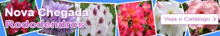 Descubro a seleção dos Rododendros