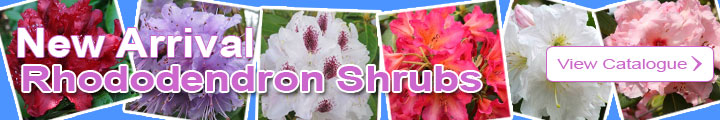 Discover the Rhododendron Catalogue