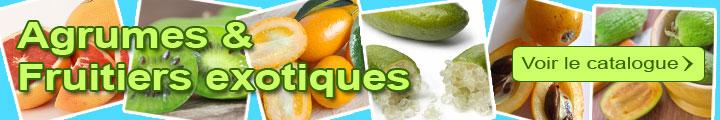 Catalogue Fruitiers exotiques et Agrumes