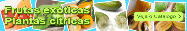catálogo Frutas exóticas e Plantas cítricas
