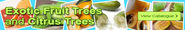 Exotic Fruit Trees and Citrus Trees catalog