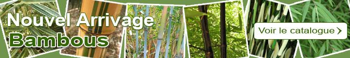 Catalogue Bambous