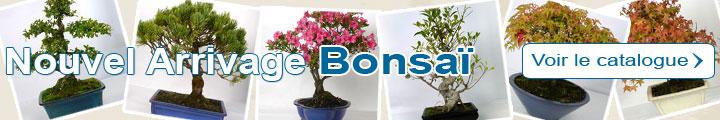 Catalogue Bonsaï