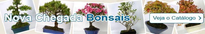 Bonsai catálogo