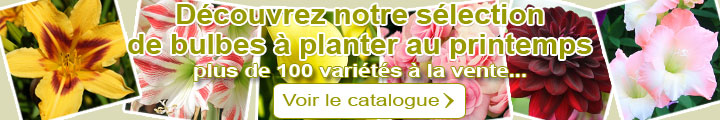 Catalogue Bulbes à planter au printemps