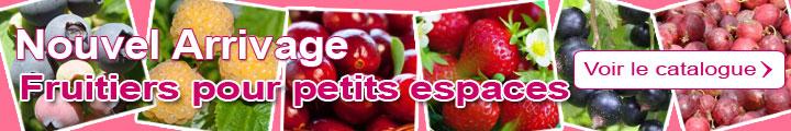 Catalogue Fruitiers pour petits espaces