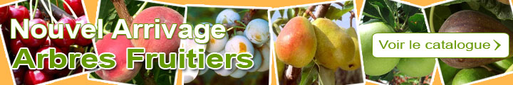 Catalogue arbres fruitiers