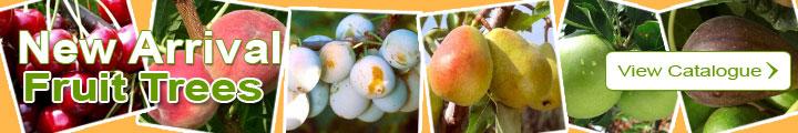 Catalog of Fruit trees