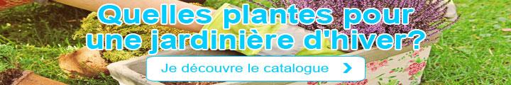 Quelles plantes pour une jardinière d'hiver?