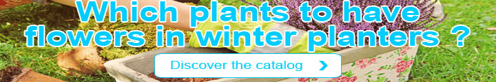 Which plants to have flowers in winter planters ?
