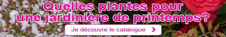 Quelles plantes pour une jardinière de printemps?