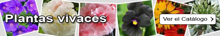Plantas vivaces, Plantas perennes
