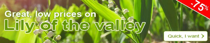 Great, low prices on Lily of the valley