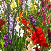 Bulbs to plant in spring