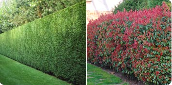 How to chose your hedge ?