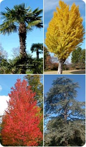 Mature Trees Catalogue