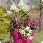 Plants to have flowers in spring planters