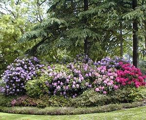 planter goji pleine terre