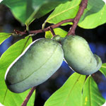 Exotic Fruit Trees