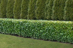 Screening Hedge