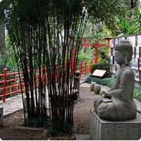 Achat Bambous Quels Bambous Acheter