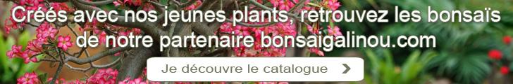 Créés avec nos jeunes plants, retrouvez les bonsaïs de notre partenaire bonsaigalinou.com