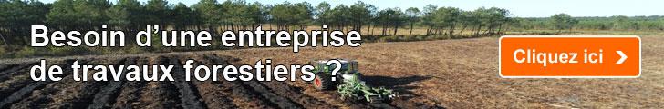 Besoin d'une entreprise de travaux forestiers ?