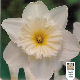 Narciso Ice Follies
