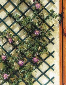 treillis pour plantes grimpantes jardin sur enperdresonlapin. Black Bedroom Furniture Sets. Home Design Ideas