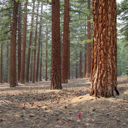 kings canyon national pk latin dating site Visit yosemite national park, sequoia and kings canyon national park, livermore.