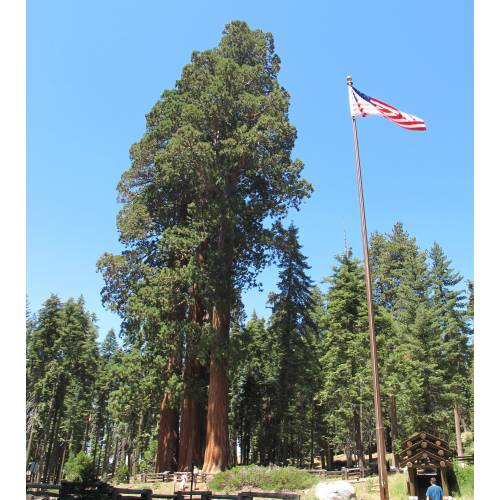 sequoia national park mature dating site Sequoia national park's best 100% free dating site meeting nice single men in sequoia national park can seem hopeless at times — but it doesn't have to be.