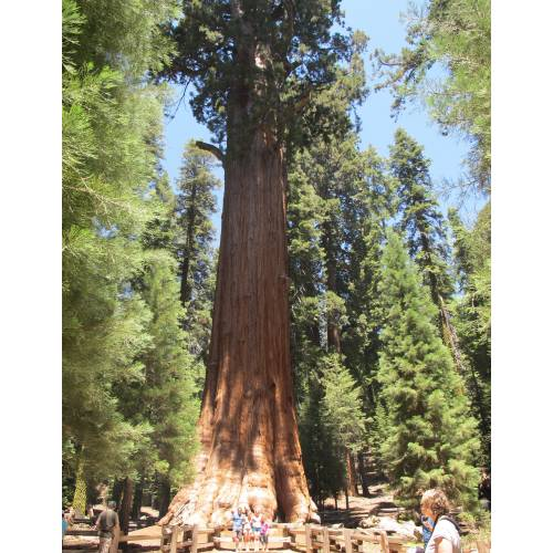 sequoia national park latina women dating site National park service logo national park service search this site all nps search open menu four lodges operate within sequoia & kings canyon national parks.