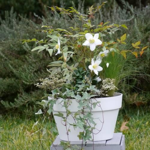 Jardini re d 39 hiver 39 winter round 39 vente jardini re d for Jardiniere d hiver