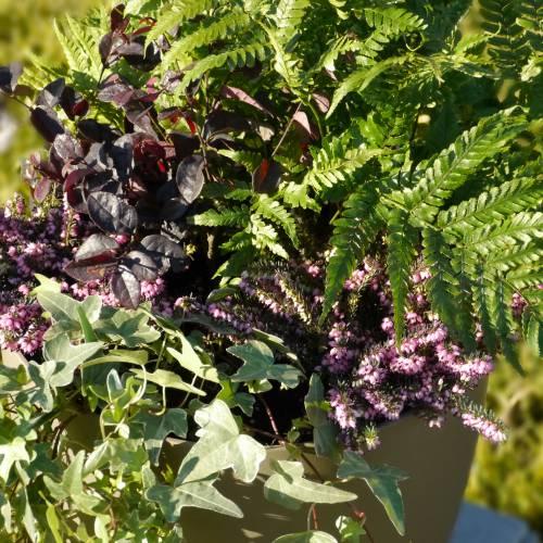 Jardini re d 39 hiver 39 winter pinky moka 39 vente jardini re for Jardiniere d hiver