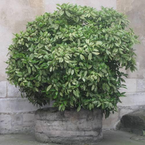 Jardin d\'ombre: Que planter à l\'ombre ?