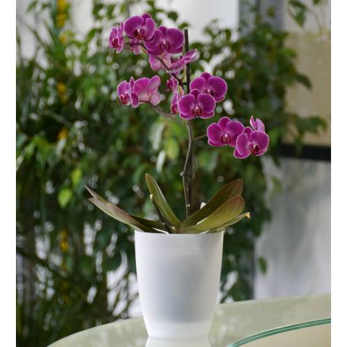 Cache pot orchidée