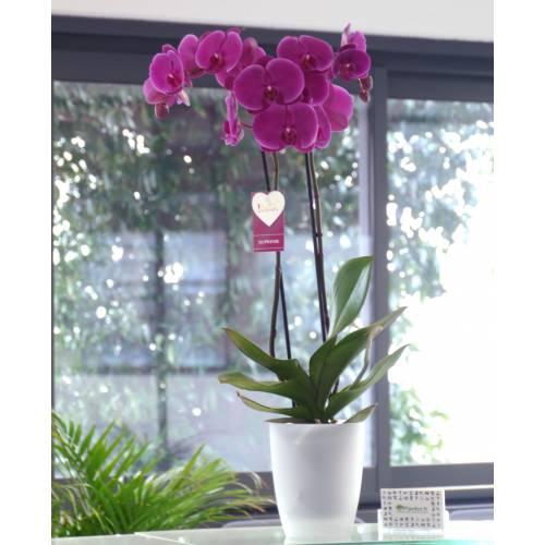 Orchidée Mauve + Cache pot Transparent : vente Orchidée ...