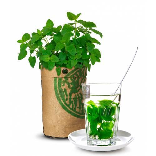 Kit de culture plantes th melisse citronnelle vente for Site de vente de plantes
