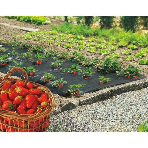 Paillage fraise fraisiers 50 microns 1m40 x 50m vente for Animales de plastico para jardin