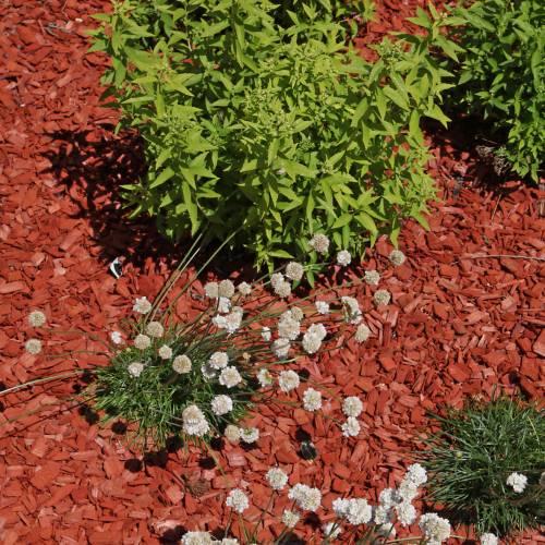Copeaux de bois color s rouge vente copeaux de bois for Copeaux de bois pour fumoir