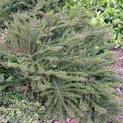 PLANFOR : pepiniere jardinerie, tout pour le jardin : arbre ...