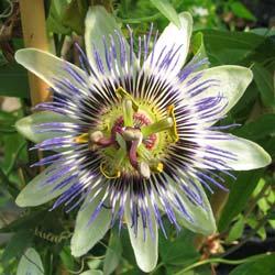 bee3dd7b70c PLANFOR   pepiniere jardinerie