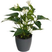 Plante a offrir pour anniversaire