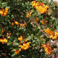 Planfor Pepiniere Jardinerie Tout Pour Le Jardin Arbre Arbuste Rosier Et Aussi Bonsai Plant Truffier Formulaire Recherche
