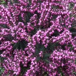 Quelles Plantes Pour Une Jardiniere D Hiver