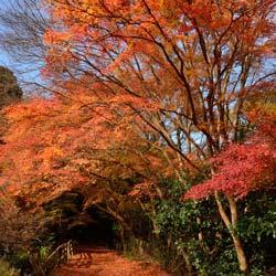 Erable palm erable japonais lisse acer palmatum conseils de culture - Erable du japon orange dream ...