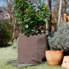Protection des plantes en pot Winterpot